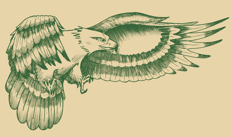 Golden Eagle Drawing