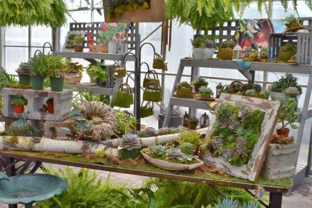Potted succulents and exotics