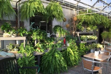 Seating area with Potted Plants